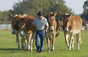 4 Mules and Bob